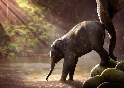 un éléphant encourage un éléphanteau à entrer dans un lac